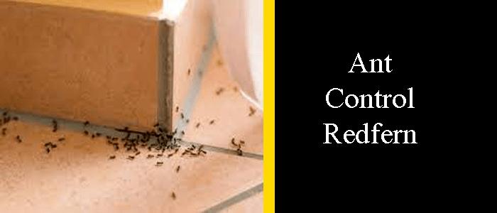 Ant Control Redfern
