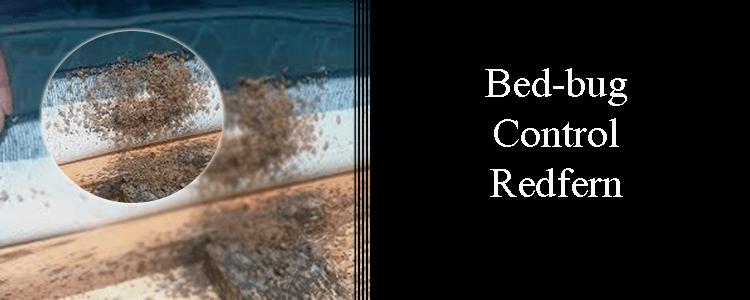 Bed Bug Control Redfern