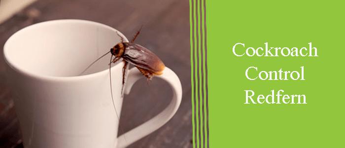 Cockroach Control Redfern