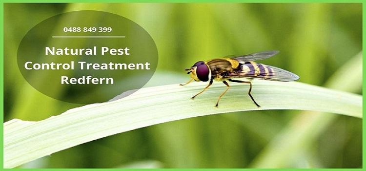 Natural Pest Control Treatment Redfern