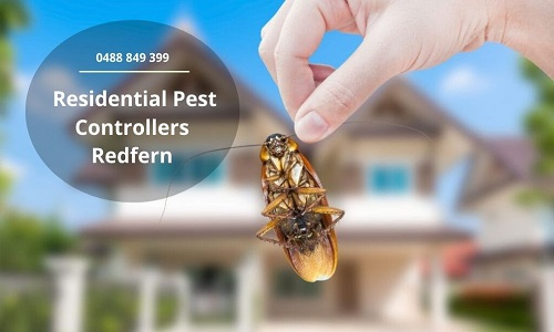Residential Pest Controllers Redfern